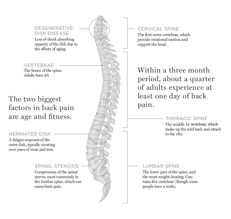 Diagram of the human spine with medical statistics
